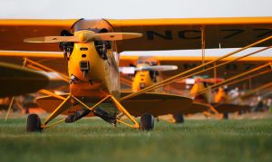 Field of Yellow, Cubs at Oshkosh