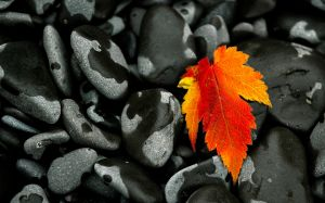 Fall Leaf, Lake Superior